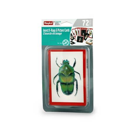 radiographie-insectes-roylco