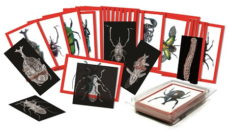 radiographie-insectes-education-sciences