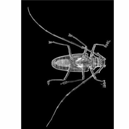 radiographie-xrays-insectes-roylco