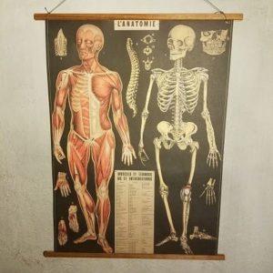affiche-pedagogique-cavallini-anatomie-squelette