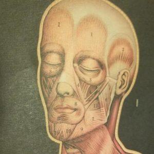 affiche-pedagogique-cavallini-anatomie-squelette-vintage