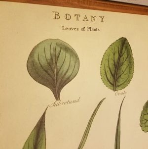 affiche-pedagogique-cavallini-arbres-homeschooling-vintage-botanique-naturalisme