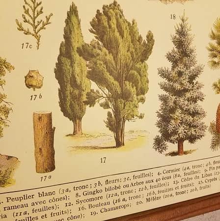 affiche-pedagogique-cavallini-arbres-homeschooling-vintage-montessori-naturalisme-botanique