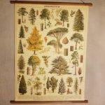 affiche-pedagogique-cavallini-arbres-homeschooling-vintage-montessori-naturalisme