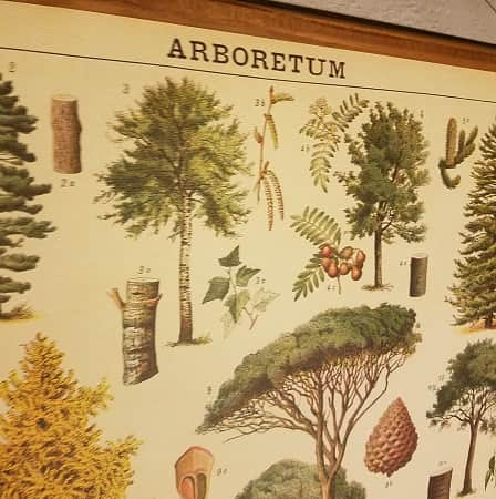 affiche-pedagogique-cavallini-arbres-homeschooling-vintage-waldorf-naturalisme