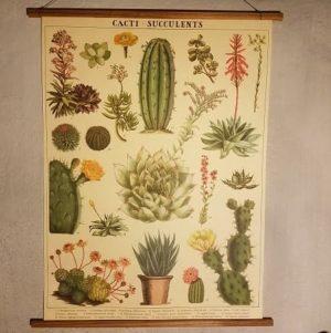 affiche-pedagogique-cavallini-cactus-succulentes-homeschooling-vintage
