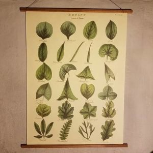 affiche-pedagogique-cavallini-feuilles-homeschooling-vintage-montessori-naturalisme