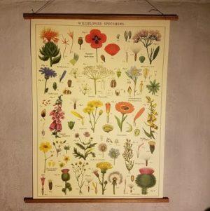 affiche-pedagogique-cavallini-fleurs-sauvages-wildflowers
