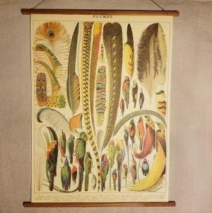 affiche-pedagogique-cavallini-plumes-homeschooling-vintage-montessori