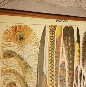 affiche-pedagogique-cavallini-plumes-homeschooling-vintage-waldorf-collection-enfant