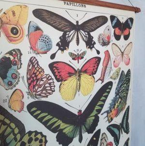 affiche-pedagogique-cavallini-papillons-naturalisme