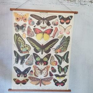affiche-pedagogique-cavallini-papillons-naturalisme-ief