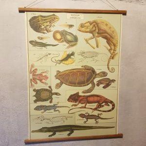 affiche-pedagogique-cavallini-reptiles-amphibiens-science-ief