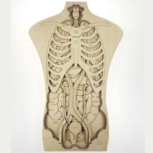 stukapuka-puzzle-geant -en-bois -anatomie-corps-humain-montessori
