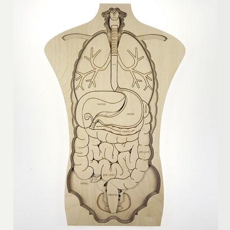 stukapuka-puzzle-geant -en-bois -corps-humain-anatomie