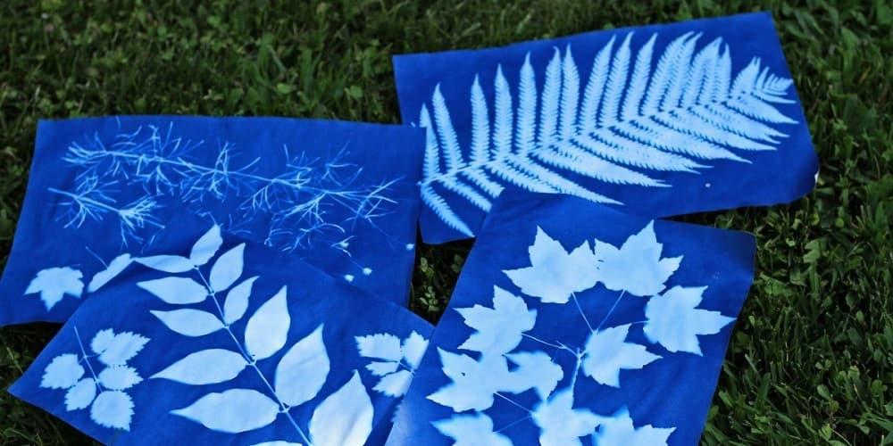 sunprint-papier-cyanotype-empreinte-forest-school