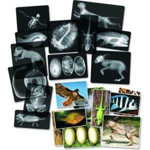 Radiographie-animaux-roylco-xrays