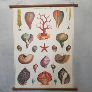 affiche-pedagogique-cavallini-coquillage-homeschooling-vintage-collection-enfant