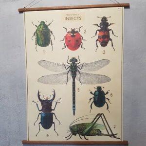 affiche-pedagogique-cavallini-insecte-ief-decoration-enfant
