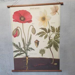 affiche-pedagogique-cavallini-pavot-homeschooling-vintage-collection-enfant