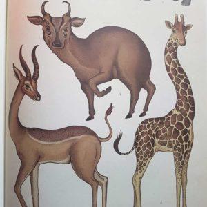 animalium-livre-enfant