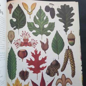 botanicum-litterature-jeunesse-ief-naturalisme
