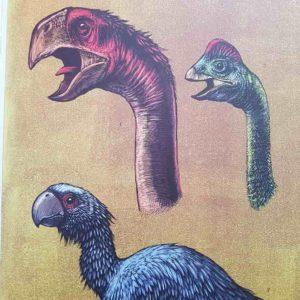dinosaurium-livre-enfant