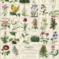 grand-puzzle-1000-pièces-cavallini-boranic-garden-jardin