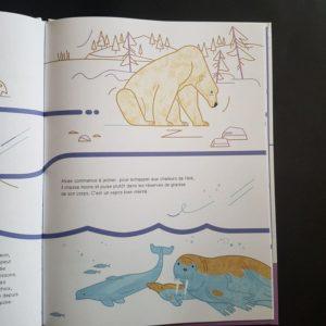 Suis-du-doigt-l'-ours-polaire
