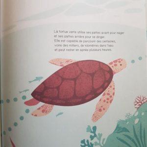 Suis-du-doigt-la-tortue-de-mer-la-cabane-bleue-livre-enfant