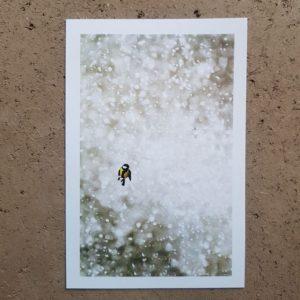 coffret-carte-postale-voeux-photographe-animalier-mésange-photovolcanique-bastien-masson