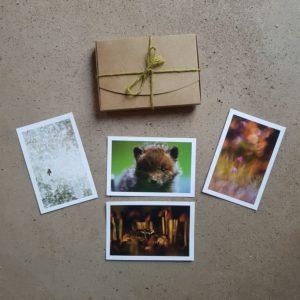 coffret-carte-postale-naturaliste-voeux-photographe-animalier-photovolcanique-bastien-masson