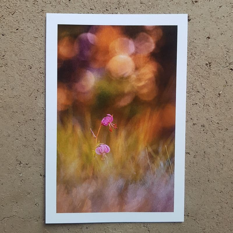 coffret-carte-postale-voeux-photographe-lys-martagon-animalier-photovolcanique-bastien-masson
