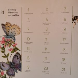 21-petites-histoires-naturelles-les-insectes-album-jeunesse