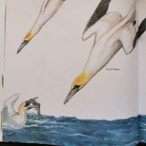 21-petites-histoires-naturelles-les-oiseaux-livre-jeunesse