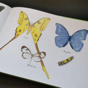 hier-chenille-aujourd'hui-papillon-coll-ohe-la-science-album-jeunesse