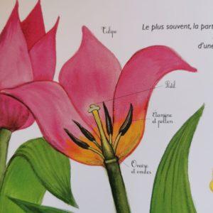 une-belle-plante-ohe-la-science-livre-enfant