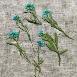 fleur-sechee-pressee-alysson-maritime-bleu-craft-diy