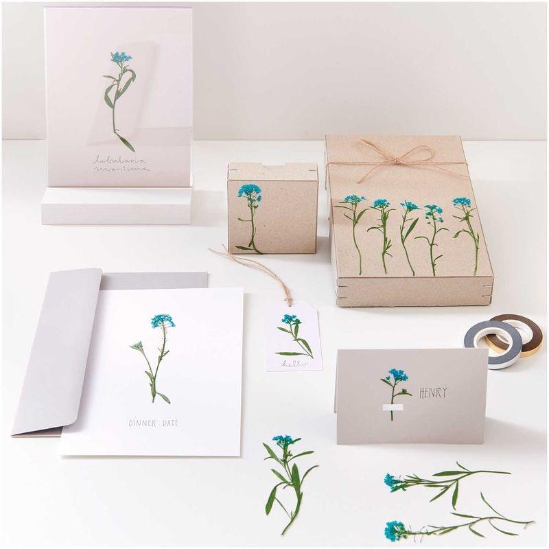 fleur-sechee-pressee-alysson-maritime-bleu-craft-diy-rico