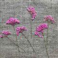 fleur-sechee-pressee-ammi-rose-craft-diy