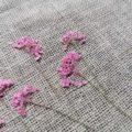 fleur-sechee-pressee-ammi-rose-craft-diy-nature