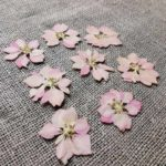 fleur-sechee-pressee-delphinium-rose-craft-diy-nature