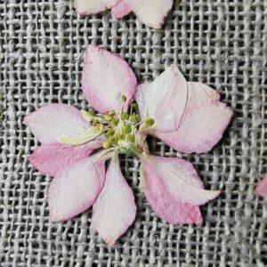 fleur-sechee-pressee-delphinium-rose-craft-diy-waldof