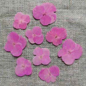 fleur-sechee-pressee-hortensia-rose-craft-diy