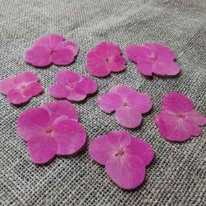 fleur-sechee-pressee-hortensia-rose-craft-diy-nature