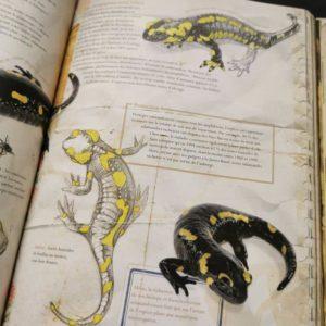 les-carnets-de-nature-ludiques-et-poétiques-animaux