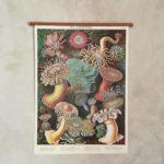 affiche-cavallini-anemones