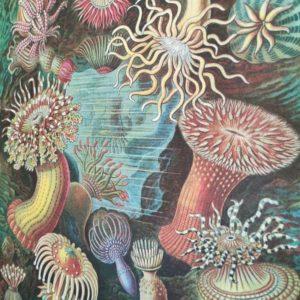 affiche-cavallini-anemones-decoration-marine