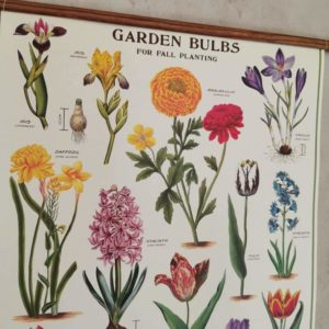 affiche-cavallini-bulbes-du-jardin-decoration-naturelle