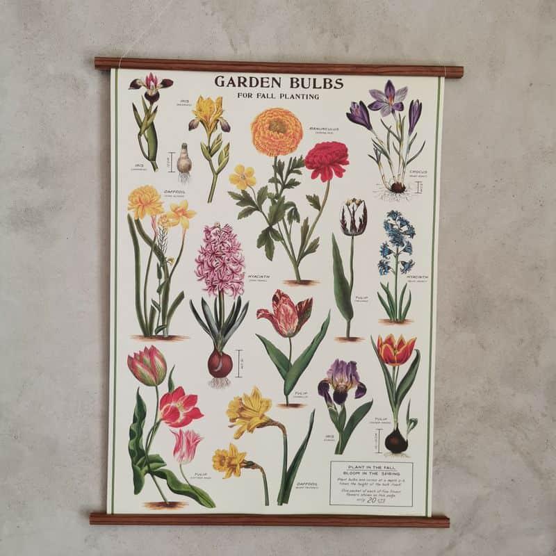 affiche-cavallini-bulbes-du-jardin